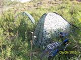 Наши палатки в кустах