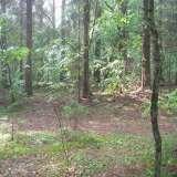 Лес во время дождя