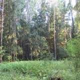 Дремучий лес в центре Обнинска