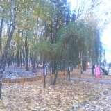Виды парка в Брянске