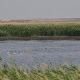Обитатели степного водоёма