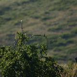 Птицы и мошкара
