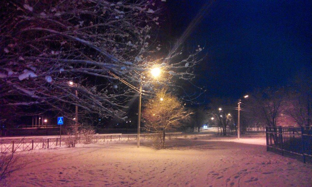 Пушистый снег на ветках деревьев